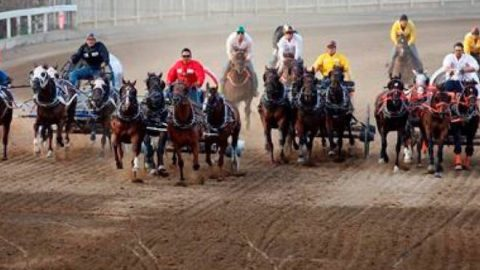 Chuckwagon driver fined, disqualified after third horse dies at Calgary Stampede